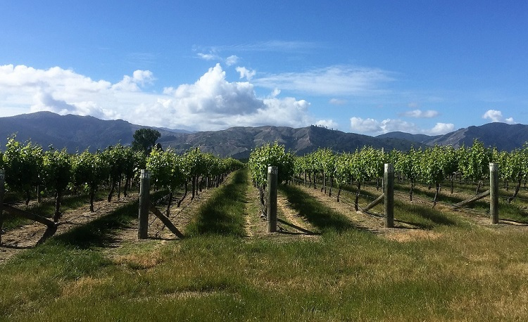 vines with mountains in the background and blue sky